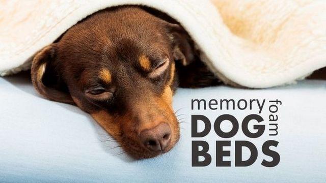 Les meilleurs lits de chien en mousse à mémoire: 4 stations de sommeil confortables pour votre chiot