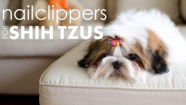 Les meilleurs coupe-ongles pour shih tzu de: protéger les pattes de votre chiot