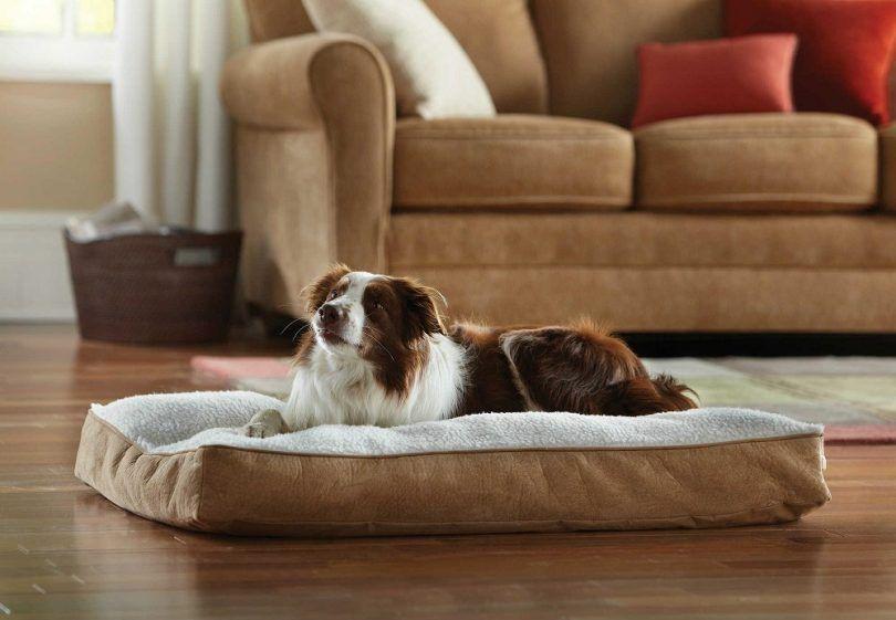 Meilleur chien lit orthopédique: choisir le meilleur pour votre animal de compagnie