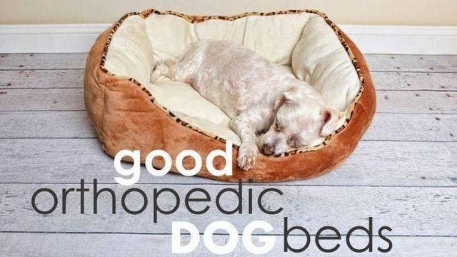 Les meilleurs lits pour chiens orthopédiques (grands chiens vont adorer ces ...)
