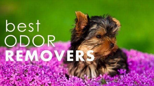 Meilleures neutralisants d`odeurs pour animaux de compagnie: se débarrasser des odeurs pour de bon!