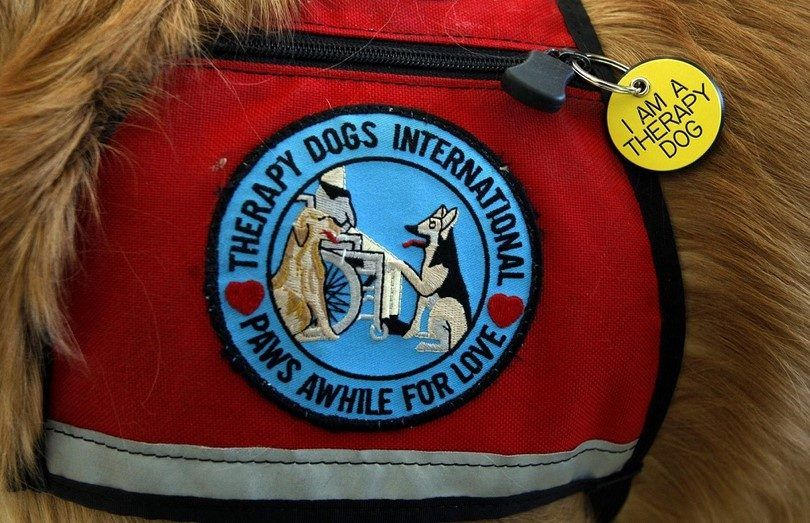 Les meilleurs chiens de thérapie: quels sont les chiens que nous pouvons compter?