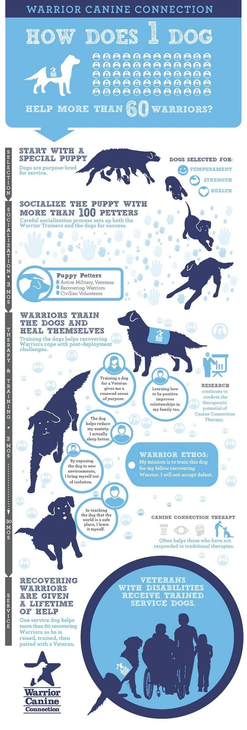 Une aide de chien beaucoup infographique