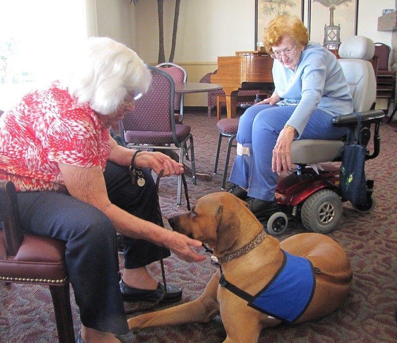 chien de thérapie avec les aînés