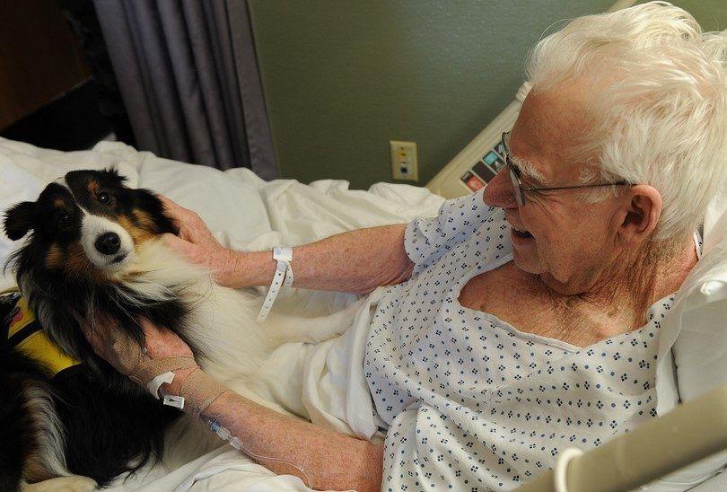 Collie chien de thérapie