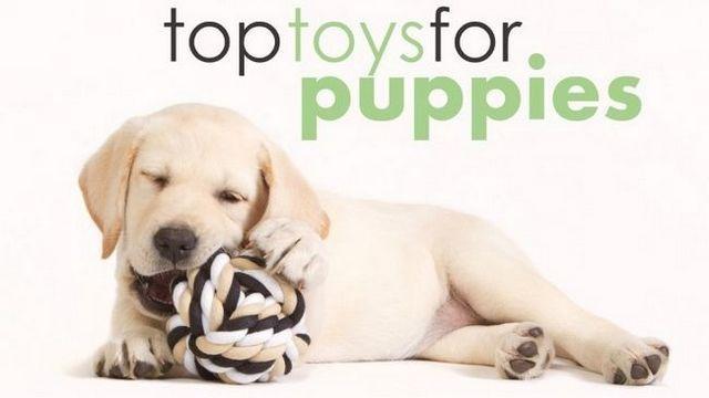 Les meilleurs jouets pour les chiots: les aider à obtenir que l`énergie!