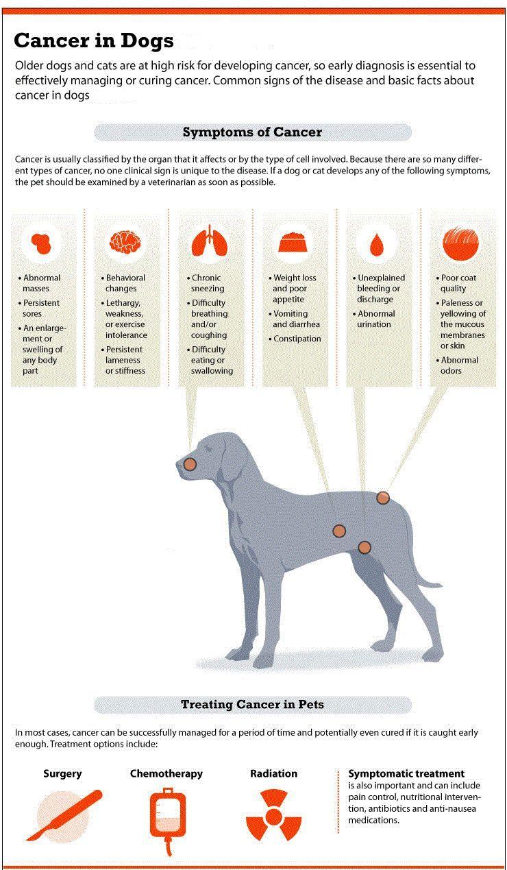 Le cancer des os chez les chiens: un guide complet pour les propriétaires de chiens