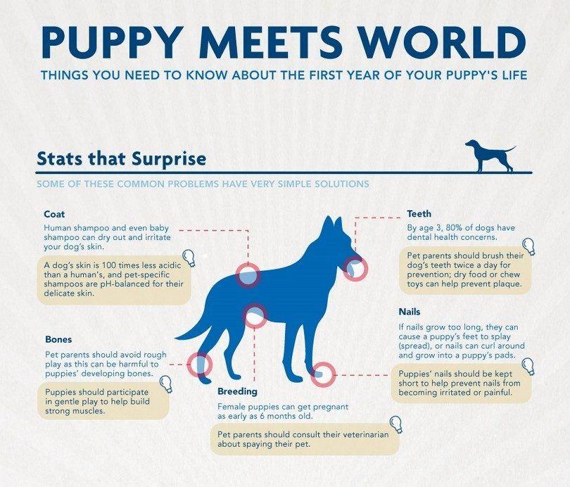 Puppy rencontre le monde infographique
