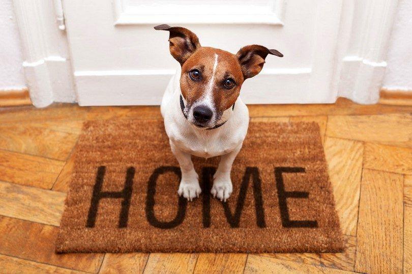 Apportant une nouvelle maison de chien: les choses que vous devez savoir avant que la famille devient de plus