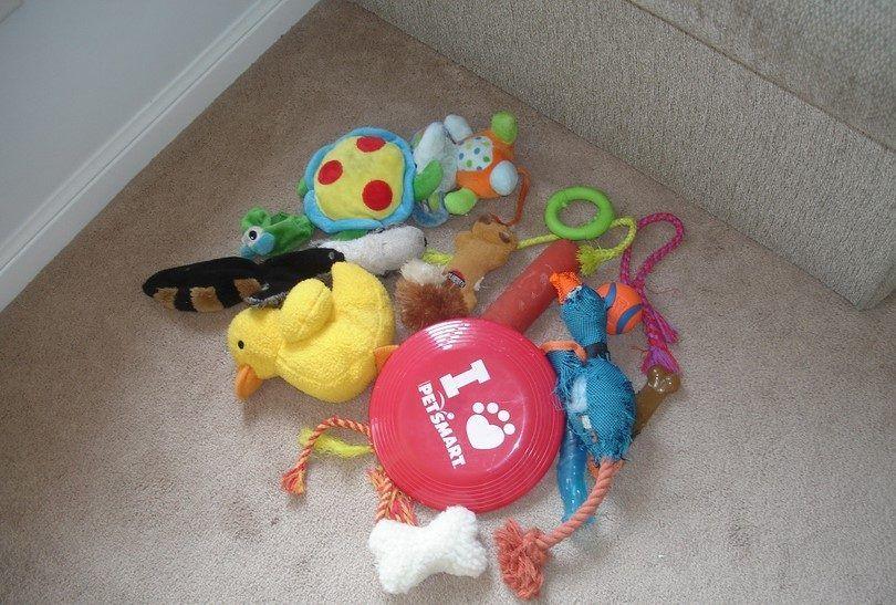 jouets Puppy
