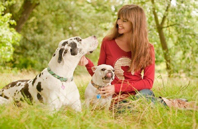 Les chiens dans le parc