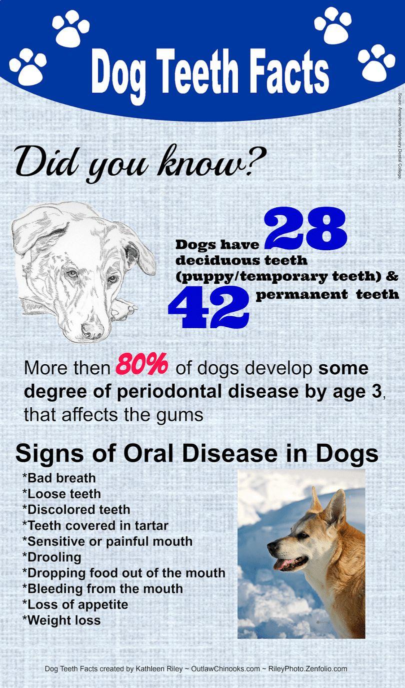Brossage dents des chiens: un soin dentaire parfaite