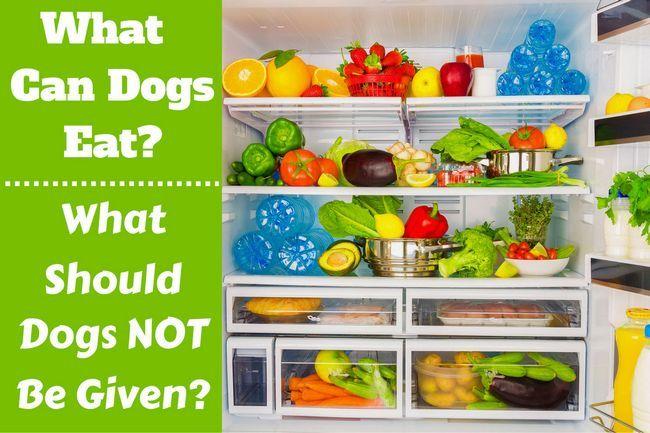 Qu`est-ce que les chiens peuvent manger écrit à côté d`un réfrigérateur rempli de nourriture
