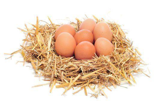 7 oeufs de poulet dans une maquette oiseaux de foin nid sur bg blanc