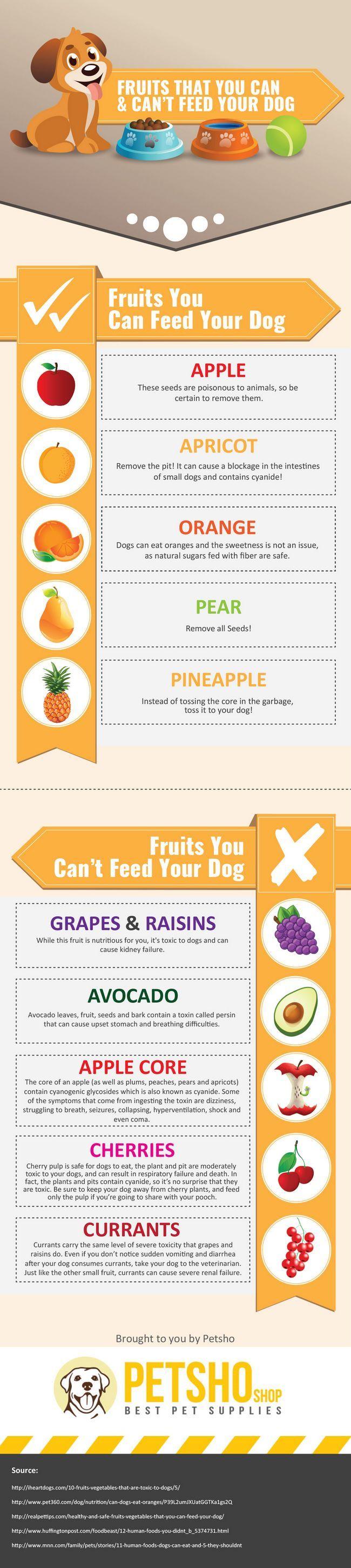 les chiens peuvent manger des fruits infographique