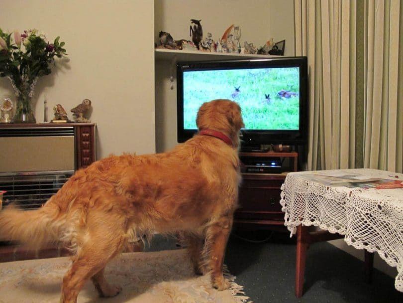 Doggy expérience de visionnement