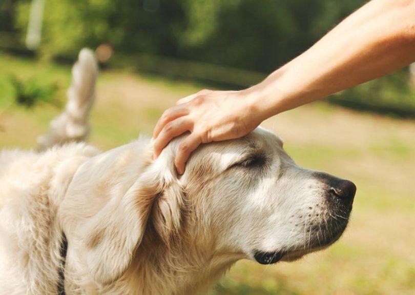 Les humains peuvent avoir des vers de chiens: une vue d`ensemble des infections parasitaires les plus courantes
