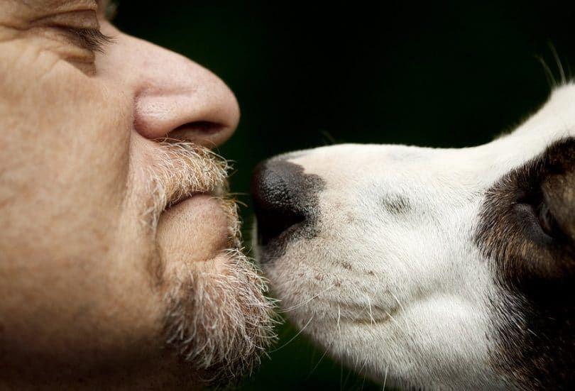 Homme et le chien