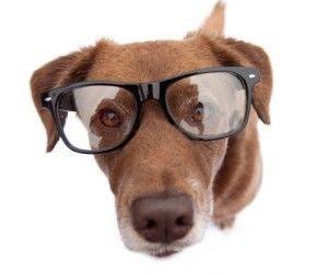 Puis-je obtenir mes lunettes de chien?