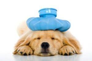 Puis-je obtenir mon assurance santé de chien?