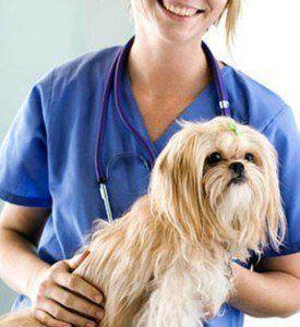 Puis-je obtenir ma chirurgie plastique de chien?