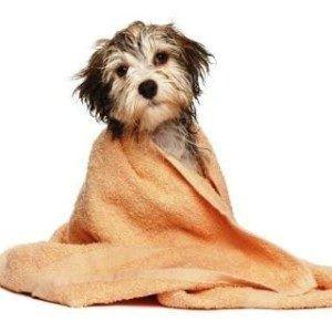 Puis-je donner mon chien un bain avec un shampooing humain?