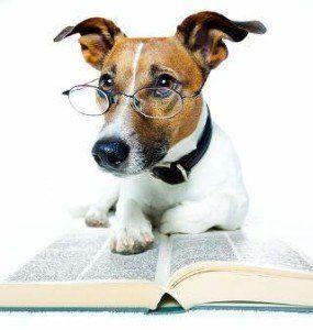 Puis-je donner mon chien un test de iq?