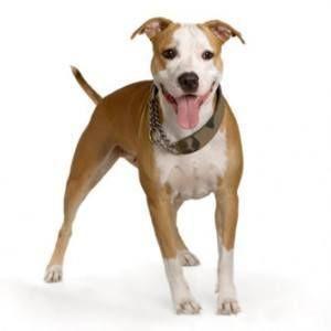 Puis-je donner mes antibiotiques pour chiens?