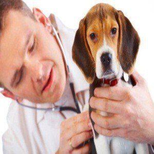 Puis-je donner mes décongestionnants chien?