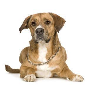 Puis-je donner mon chien médicaments contre la diarrhée?