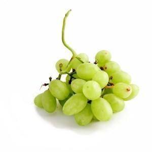 Puis-je donner mes raisins de chien?