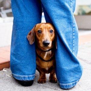 Puis-je donner mon chien relaxants musculaires?