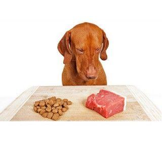 Puis-je donner mon chien aliments crus?