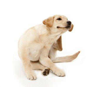 Puis-je donner mon quelque chose de chien pour les allergies?