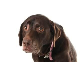Puis-je donner mon quelque chose de chien pour la dépression?