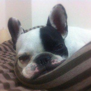 Puis-je donner mon quelque chose de chien pour des nausées?
