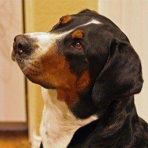 Puis-je donner mon chien quelque chose pour la douleur?