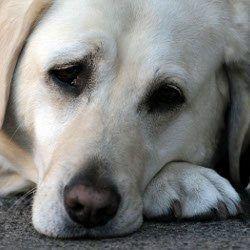 Puis-je donner mon quelque chose de chien pour des maux d`estomac?