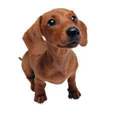 Puis-je donner mon chien les restes de table?