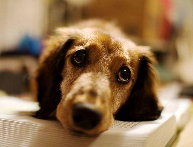 Canine Neuropathie 2