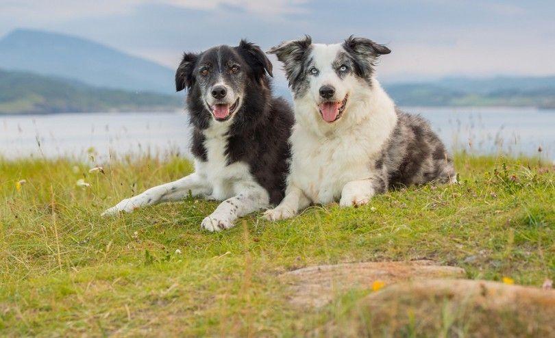 Prendre soin des chiens âgés: comment améliorer la qualité de votre ami à 4 pattes vie
