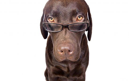 Carottes pour Ophtalmologie Dog