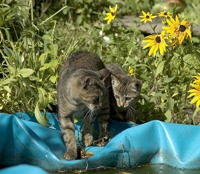 Cat peur de l`eau