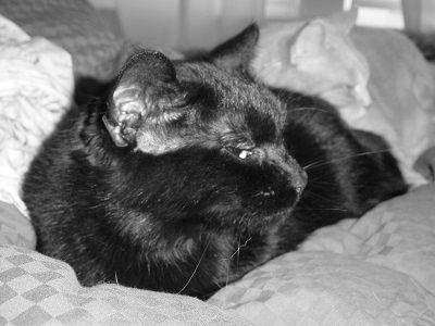 Cat alzheimer