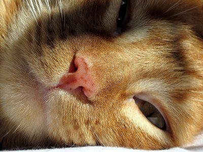 Cat ennuyez