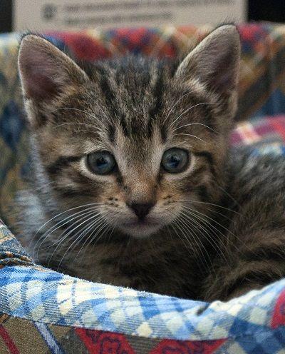Cat Conjonctivite