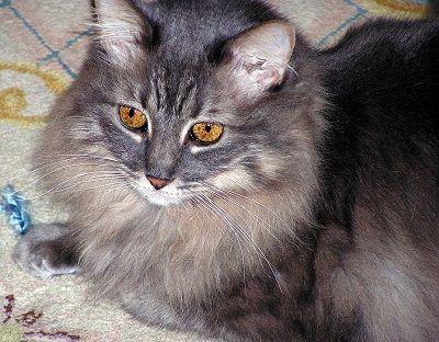 hairballs Cat
