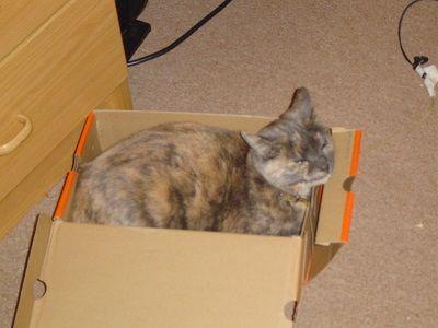 Cat formation bac à litière