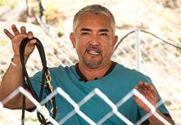 Cesar Millan à une barrière tenant une laisse de chien