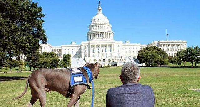 Cesar Millan avec son chien Junioe à l`édifice de la capitale à Washington